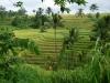 Indon-074